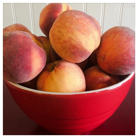 Michigan Peaches!