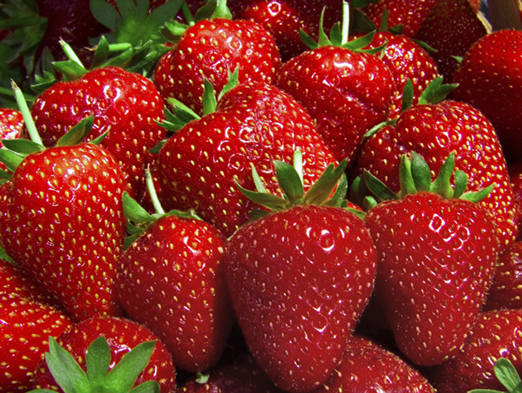 It's Strawberry Season!!