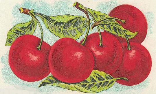 February is Cherry Month