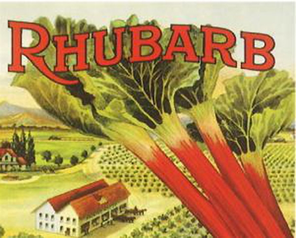 Rhubarb Season is Here!