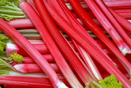 It's Rhubarb Season at the Shop