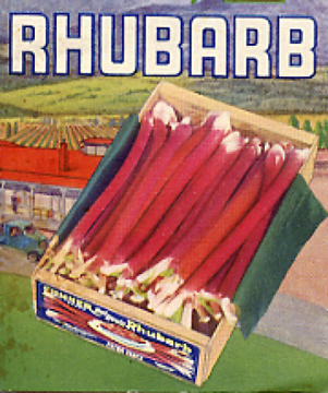It's Fresh Rhubarb Season!