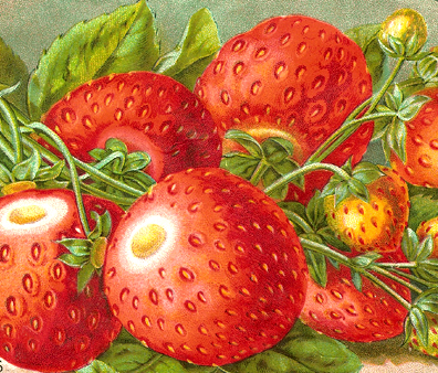 It's Fresh Strawberry Season